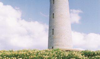 スイセンの咲く角島灯台-2