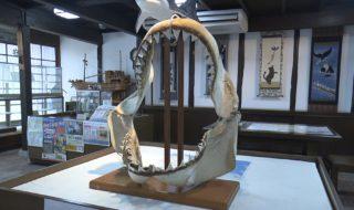 200812ホホジロザメ(短)_10000425